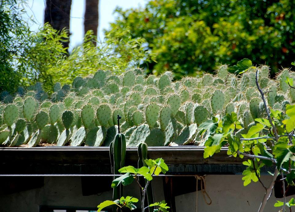 cactus roof
